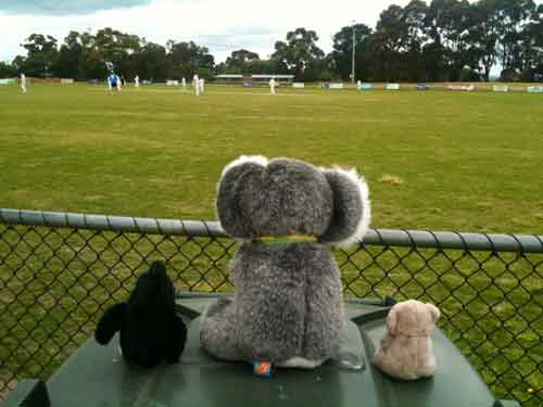 Watching cricket